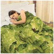 Cabbage_bed